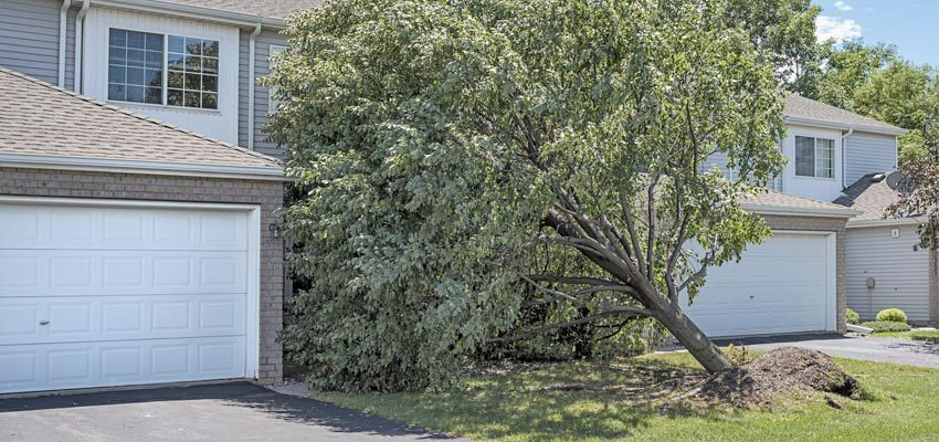 Tree falling on two houses