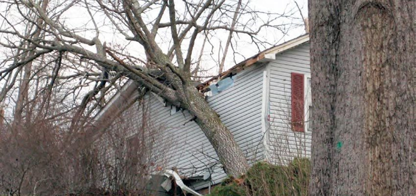 Tree causing damage after falling on home
